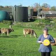 We Are Dairy Copys Green Farm
