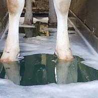 Reduction in Lameness after Introducing Deosan HH+