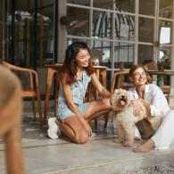 limpieza locales pet friendly